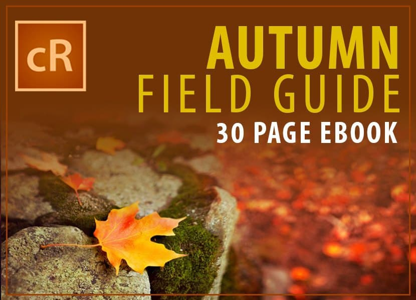 autumn-field-guide
