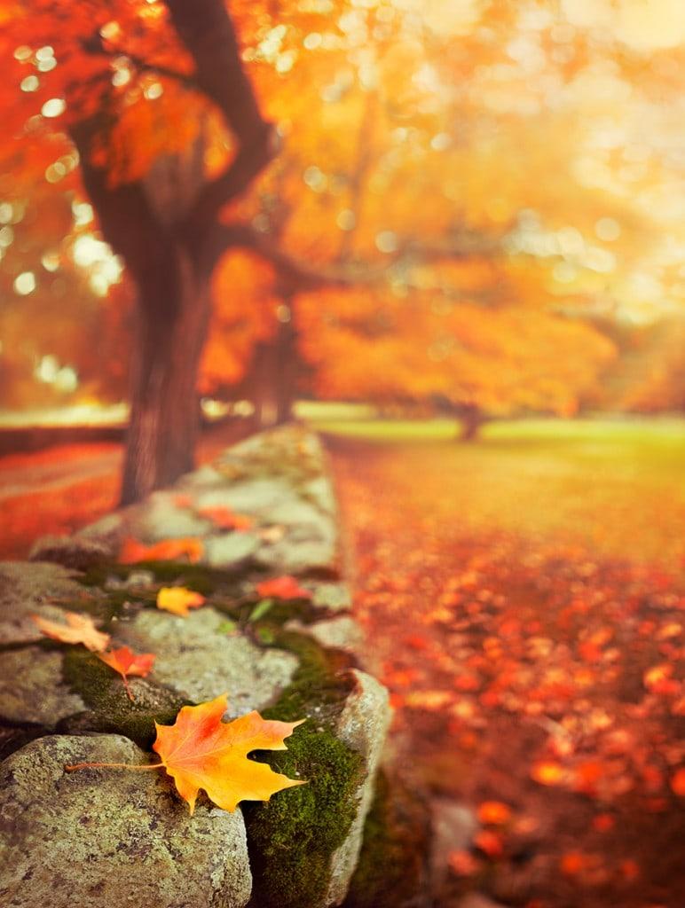 creative-fall-photography-16