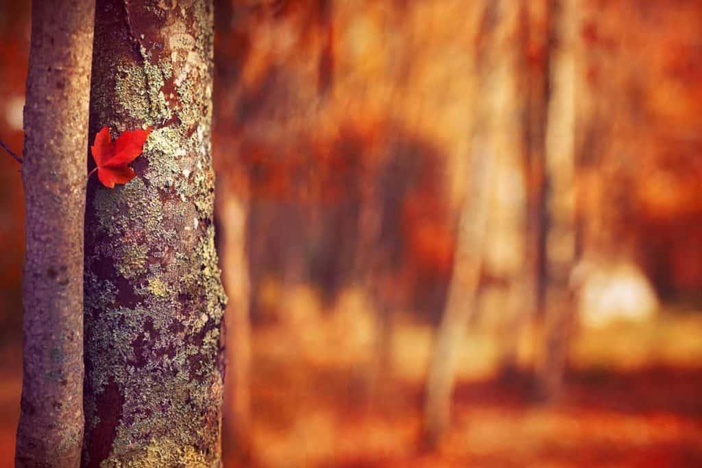 Autumn Perspective - CreativeRAW