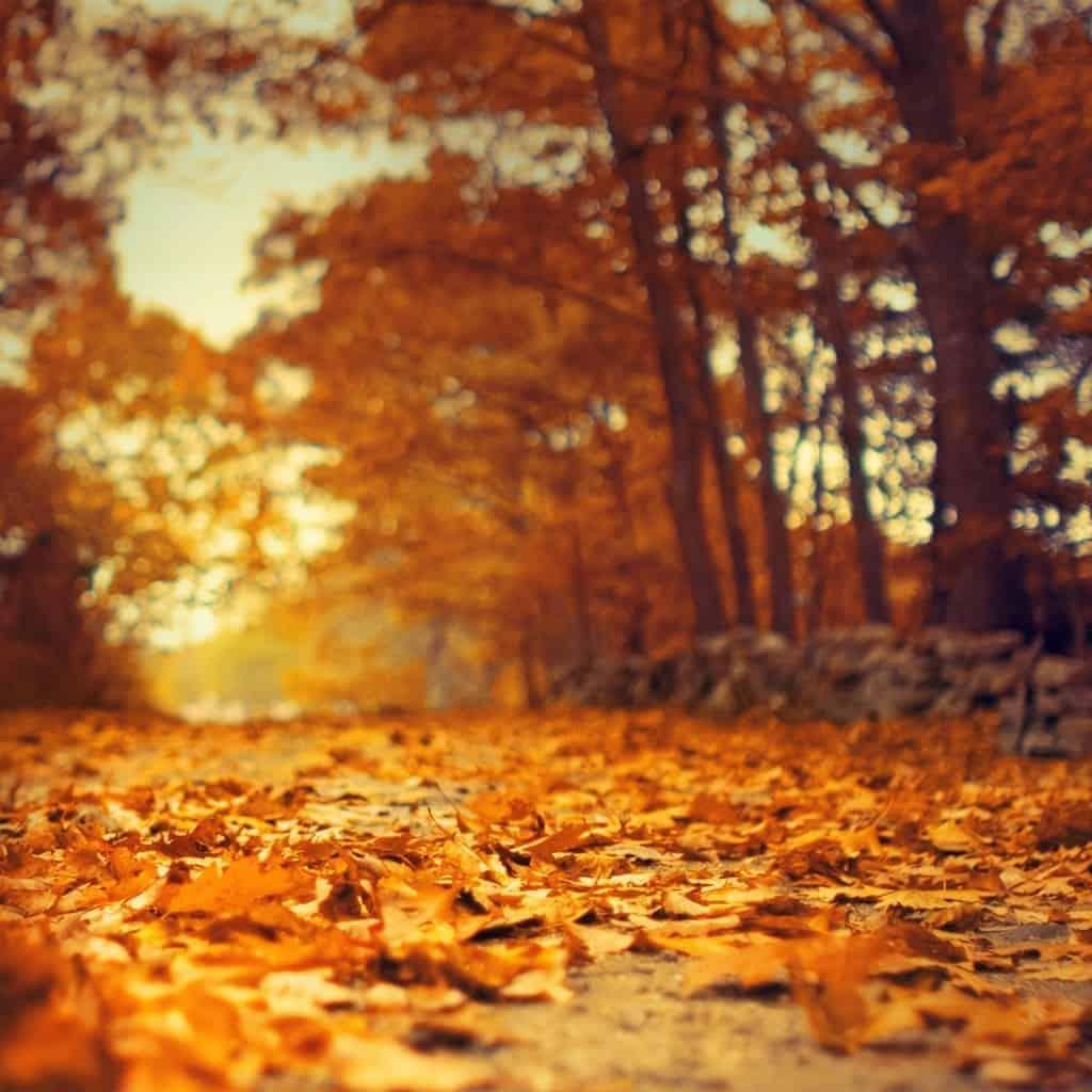 When is peak foliage? - CreativeRAW