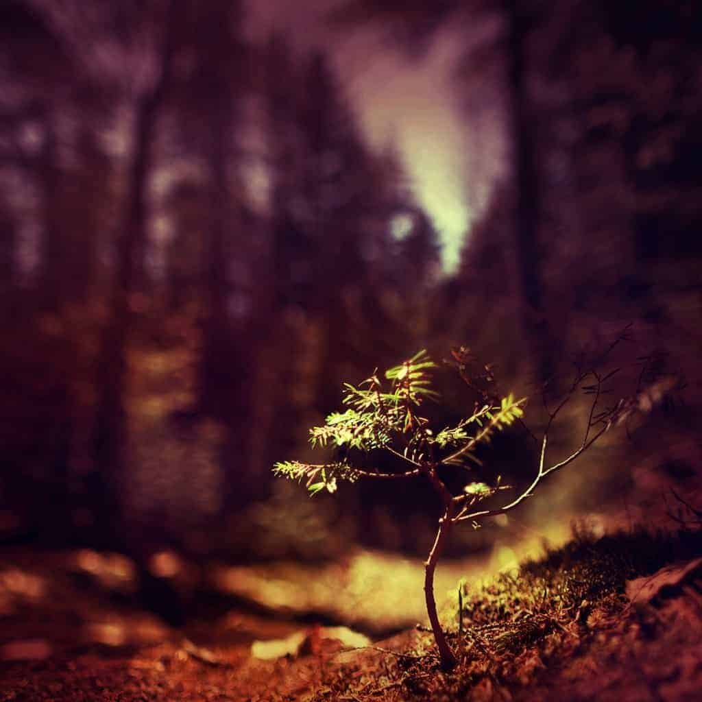Creative with a Shallow Depth of Field - CreativeRAW